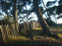 treeportisol_web