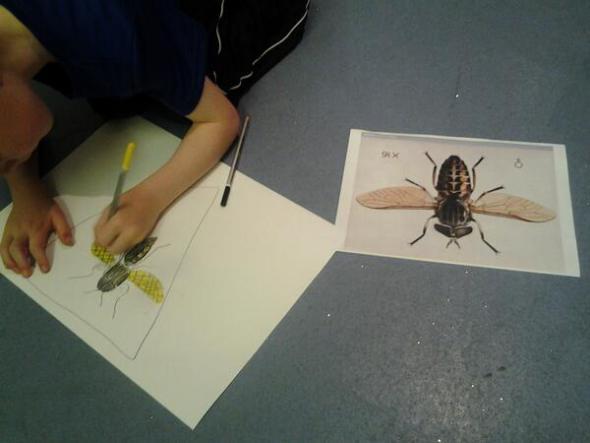 drawing-bug