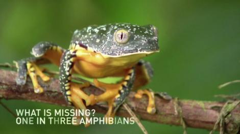 Maya Lin, amphibian, frog, climate change, biodiversity, habitat, Vimeo