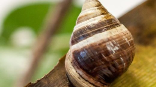 About Snails, Extinction and Hope