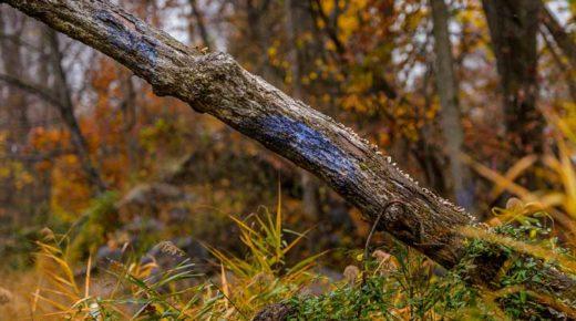 The Blued Trees Symphony
