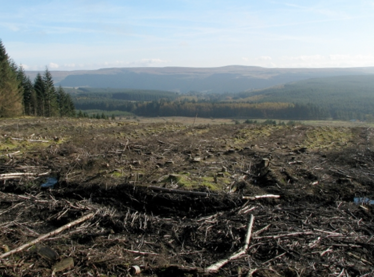 Internationally, the Food and Agriculture Organisation (FAO) still classifies clearfell (clearcut) monocrop plantation sites, like the one above pictured, as a 'forest'